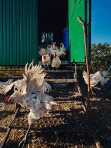 Les Bleues – Bioland-zertifizierte Tierhaltung in Mittelfranken