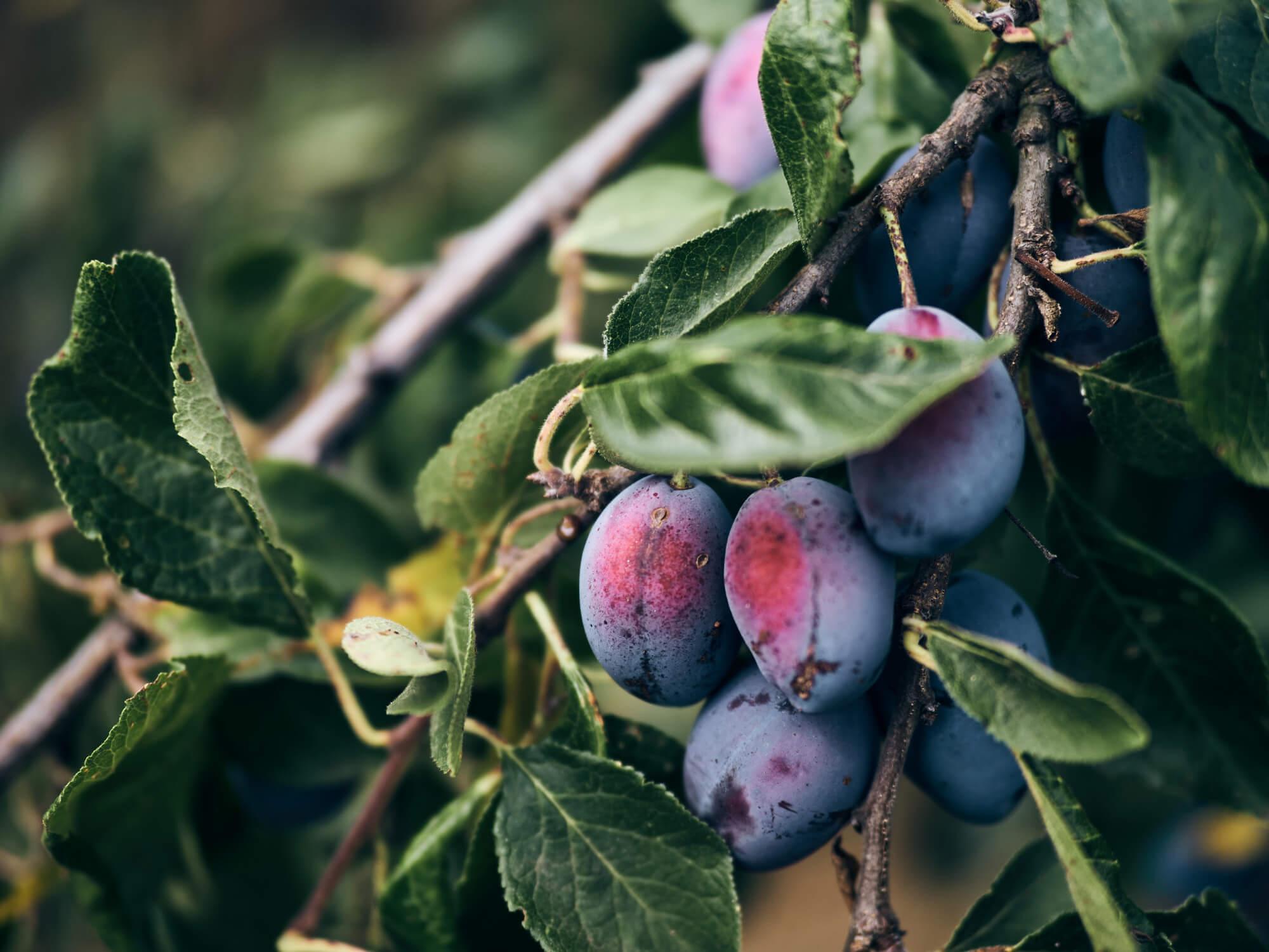 Obst und Gemüse vom Bauernhof Fetz
